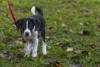 Hundeschule (10)