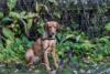 Hundeschule (4)