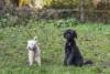 Hundeschule (5)