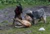Hundeschule (6)