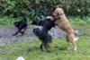 Hundeschule (8)