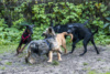Hundeschule (9)